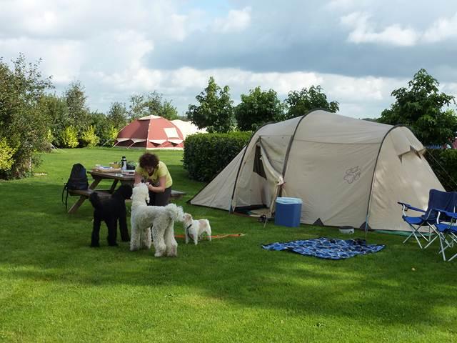 camping met hond drenthe