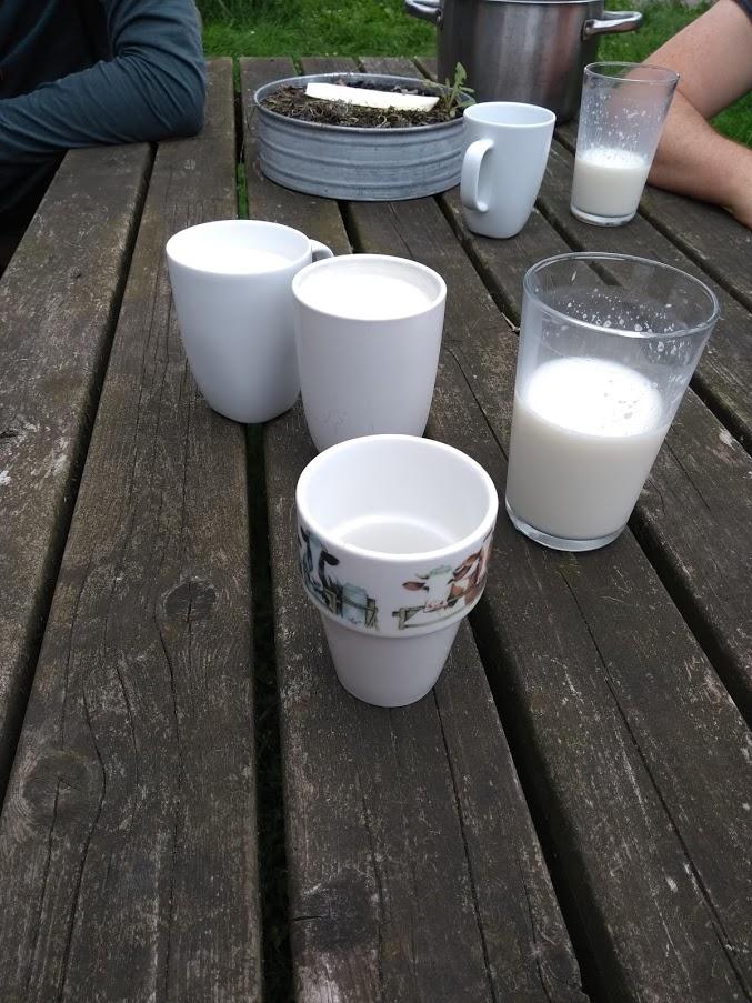 heerlijke melk tijdens kamperen bij de boer