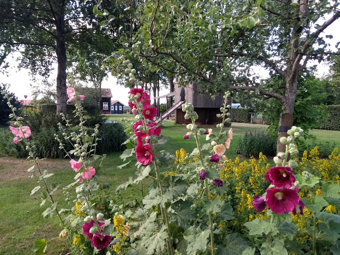 speelveld op de natuurcamping drenthe vol bloemen