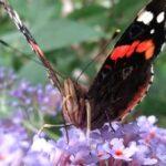 vlinders op de camping